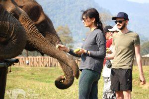 Feeding elephants - Asian Elephant Projects