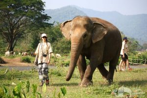 walking with elephants in Chiang Mai