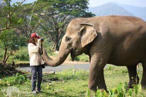 photographing elephants