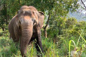 elephant expereince Love for Elephants