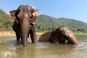 Love for Elephants