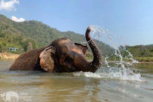 love for elephants chiang mai elephant tour