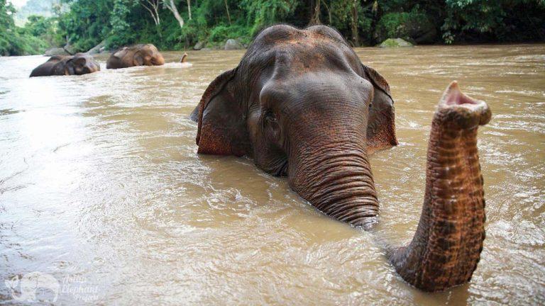 Sunshine_for_Elephants sanctuary