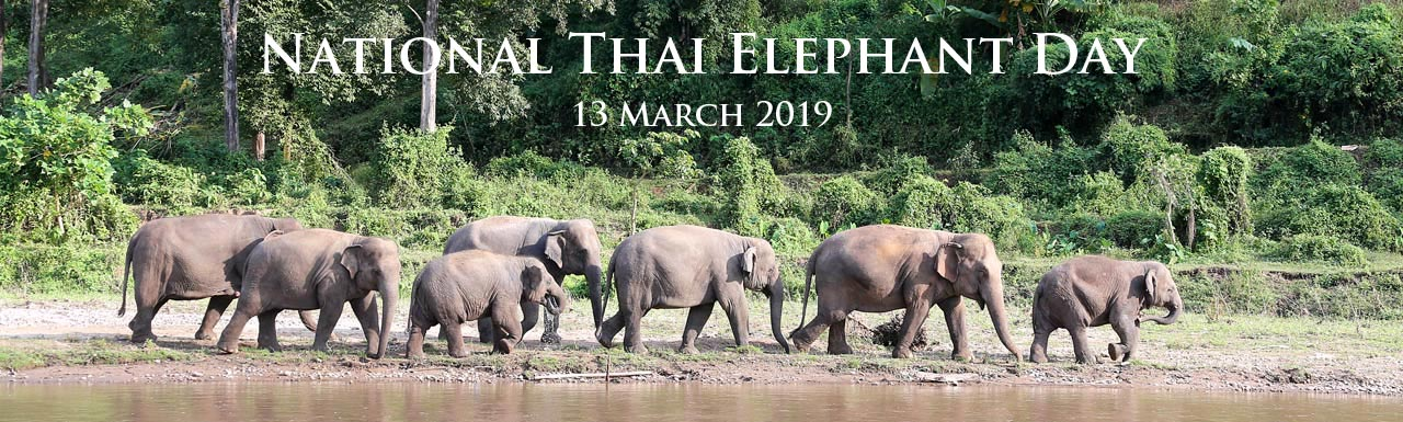 National_Thai_Elephant_Day