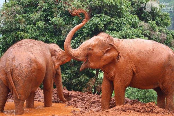 Save_Thai_Elephant_Park elephant sanctuary