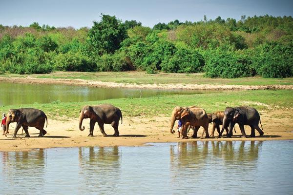 Surin_Project elephant sanctuary