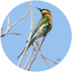 Birdlife India