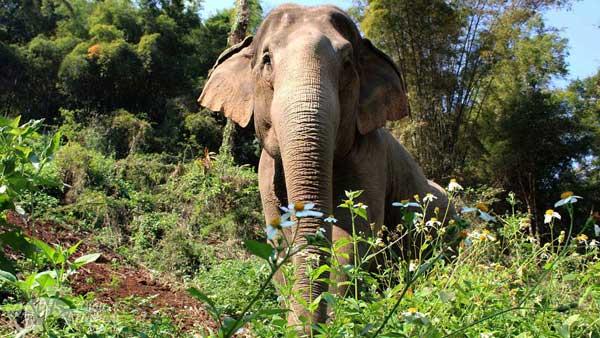 Elephant_Green_Hill