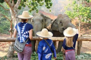 feeding elephants elephant sanctuary chiang mai