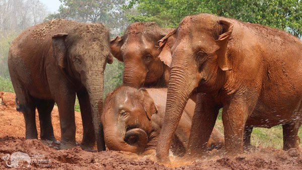 Elephant_Refuge_Project_elephant_sanctuary