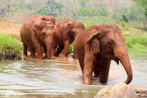 Hope for Elephants elephant sanctuary