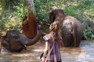watching elephants bathe at elephant sanctuary