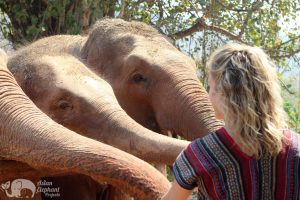 feeding elephants at elephant sanctuary