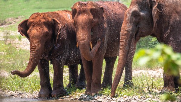 Care_for_Elephants_02