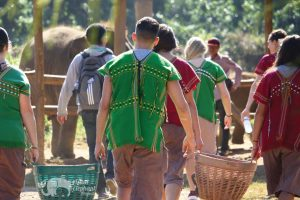 feed elephants at elephant sanctuary chiang mai