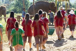 guests feed elephants at elephant sanctuary chiang mai