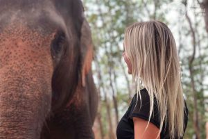 elephant volunteer thailand