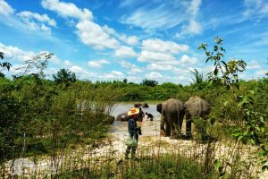 volunteer with elephants thailand