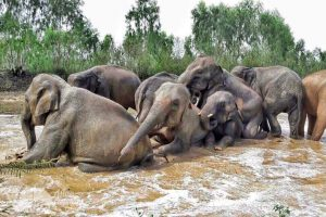 elephant volunteer program thailand