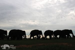 Elephants in silhouette at Elephant Homestay Khun Chai Thong