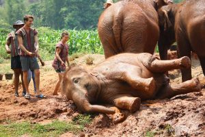 amazing time at chiang mai elephant sanctuary thailand