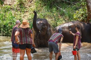 bathing elephants at chiang mai elephant sanctuary thailand