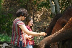feeding elephants at chiang mai elephant sanctuary thailand