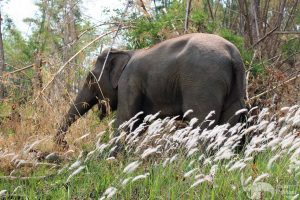beautiful elephant at elephant sanctuary chiang mai