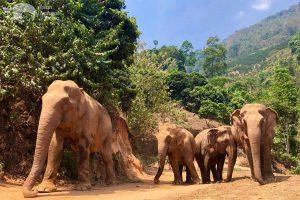observing elephants at elephant sanctuary chiang mai