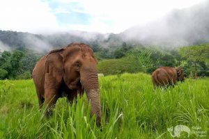 Elephants grazing at elephant sanctuary