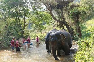 Karen Elephant Home elephant bathing