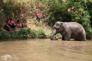 elephant bathing at chiang mai elephant sanctuary