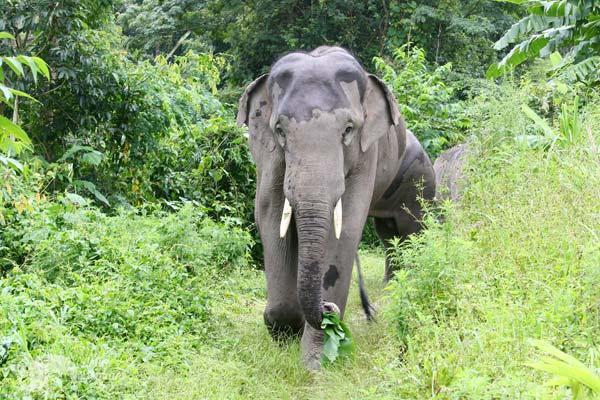 Karen Elephant Home chiang mai elephant sanctuary thailand