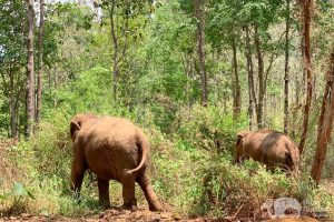 walking in the forest at chiang mai elephant sanctuary thailand
