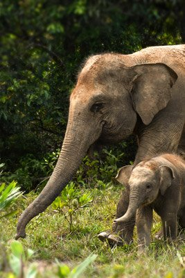 Barumun-Nagari-Wildlife-Sanctuary