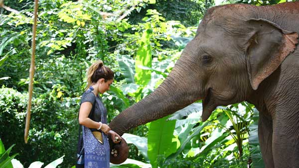 Feeding elephants at chiang mai elephant tour