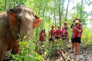 visitors watch elephants in the jungle at elephant sanctuary chiang mai