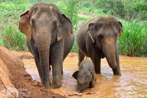 Ethical Elephant Tour Chiang Mai Karen Elephant Serenity