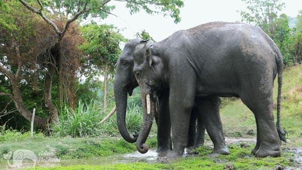 karen elephant home elephant sanctuary chiang mai