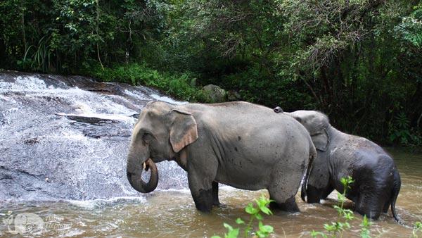 elephant bathe at waterfall elephant sanctuary chiang mai