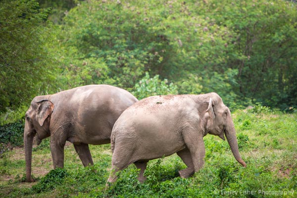 Elephant friends at Samui Elephant Sanctuary
