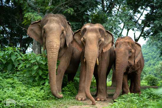 Care for Elephants