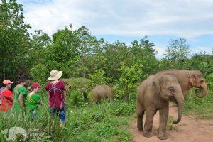Elephant Freedom observing elephants