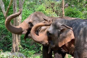 Elephant Pride ethical elephant sanctuary