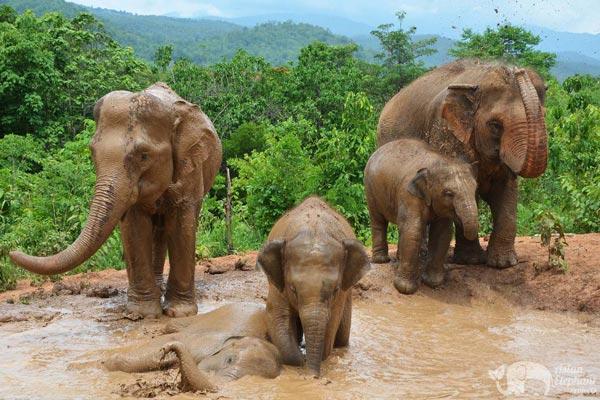 Elephant Freedom Mae Wang Chiang Mai