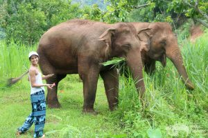 Elephant Green Hill feeding elephants