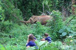 Elephant Green Hill observing elephants