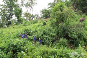 Elephant Green Hill walking with elephants