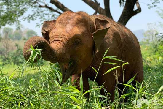 Elephant Heaven Chiang Mai