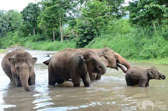 Elephant_Twlight